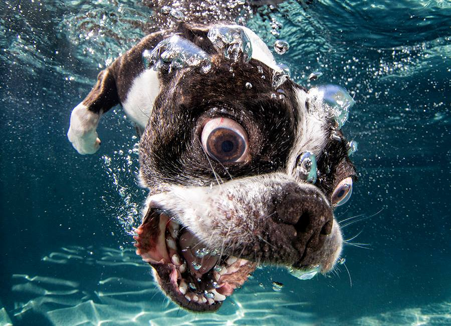 Can Dogs Dive
