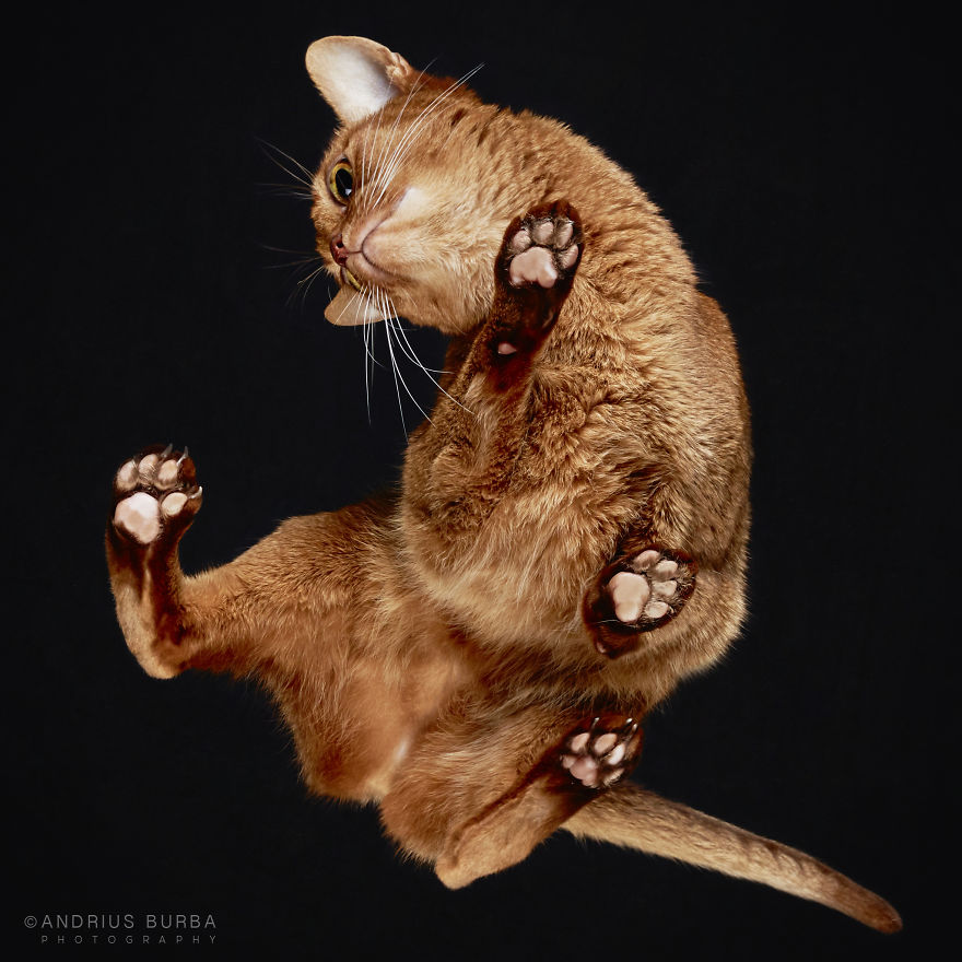 25-photos-of-cats-taken-from-underneath-9__880