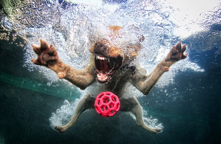 diving-dogs-photography11