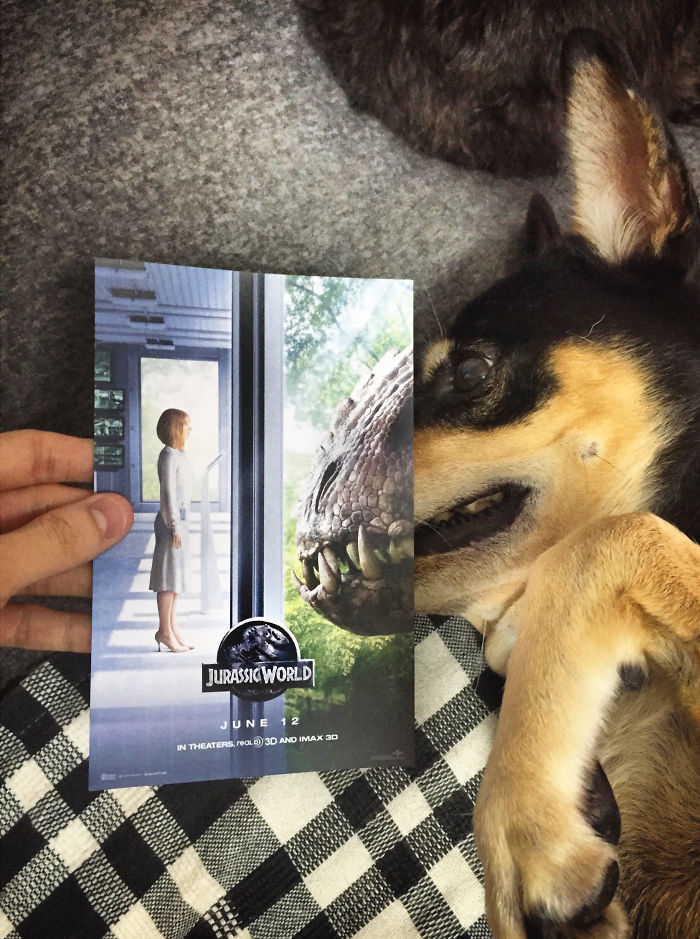 instagrammer-mashes-up-famous-movie-posters-with-real-life-puppies-3__700