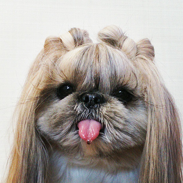 dog-hairstyles-instagram-kuma-moem-n-117__605