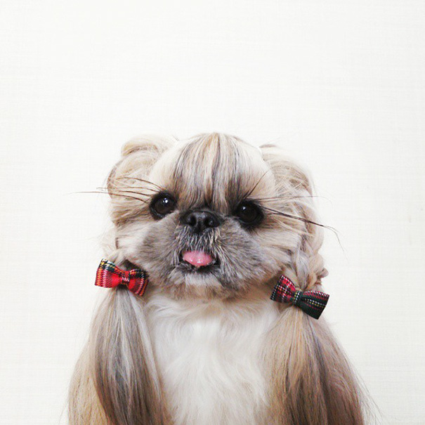 dog-hairstyles-instagram-kuma-moem-n-124__605