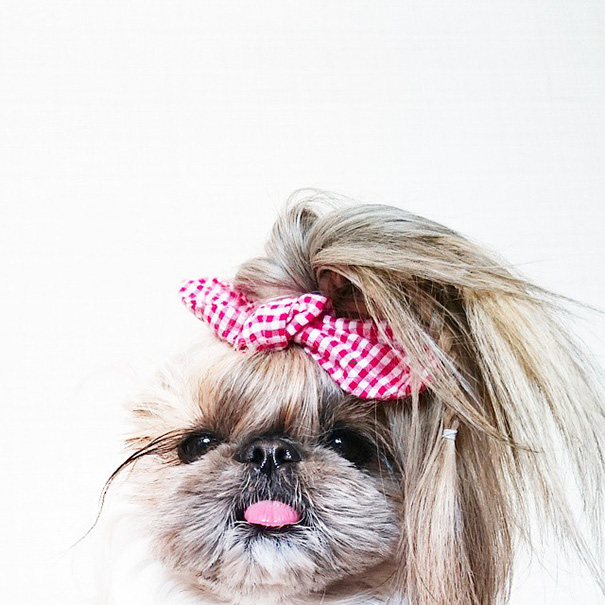 dog-hairstyles-instagram-kuma-moem-n-134__605