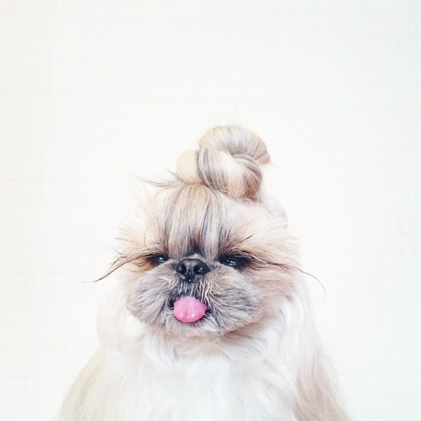 dog-hairstyles-instagram-kuma-moem-n-92__605