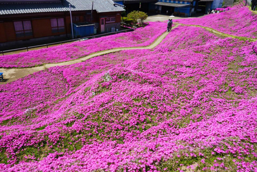 husband-plants-flowers-blind-wife-kuroki-shintomi-17