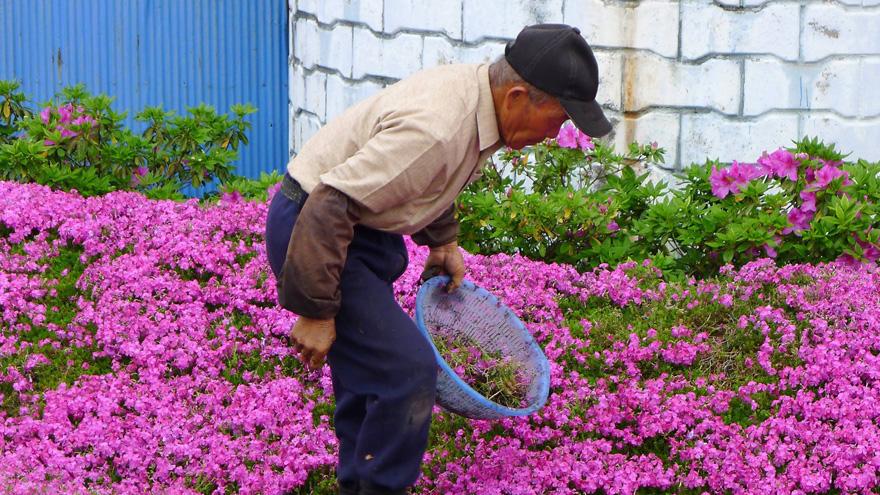 husband-plants-flowers-blind-wife-kuroki-shintomi-2
