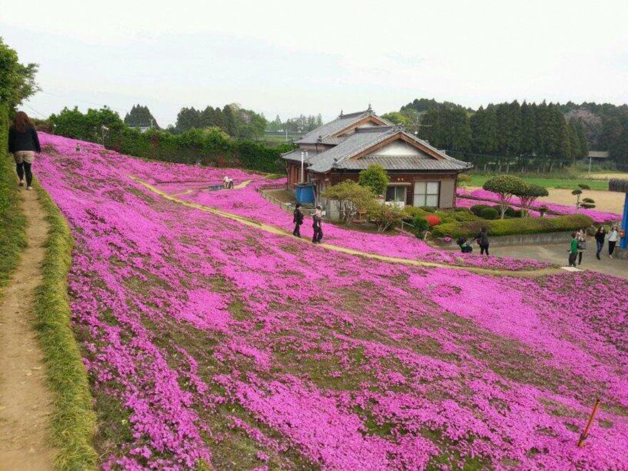 husband-plants-flowers-blind-wife-kuroki-shintomi-29
