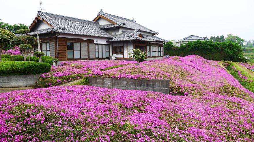 husband-plants-flowers-blind-wife-kuroki-shintomi-7