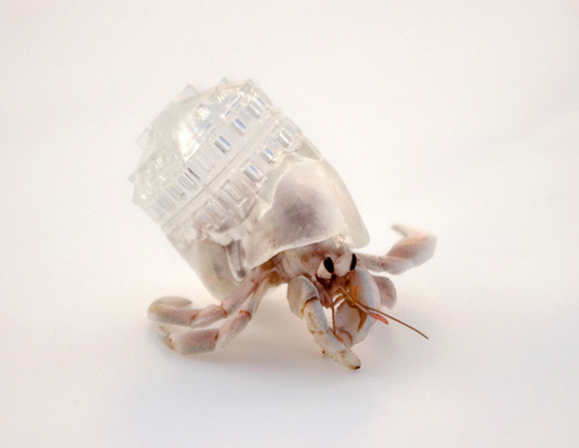 'why not hand over a shelter to hermit crabs?', 2009
