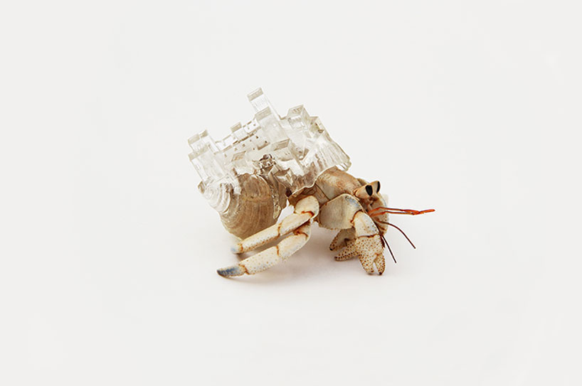 'why not hand over a shelter to hermit crabs?', 2010