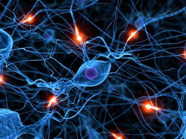 2-New-Memories-Form-New-Brain-Connections