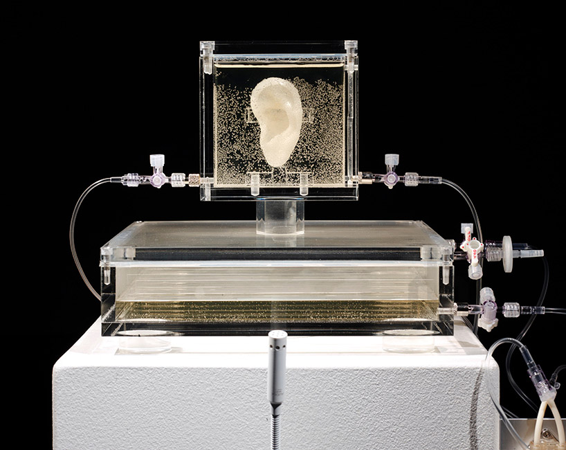 artist-has-grown-van-goghs-ear-with-DNA-and-a-3D-printer-designboom-02