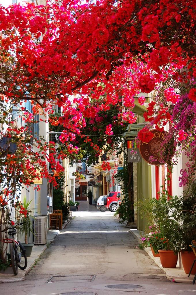 beautiful-streets-trellis-canopies-10__700