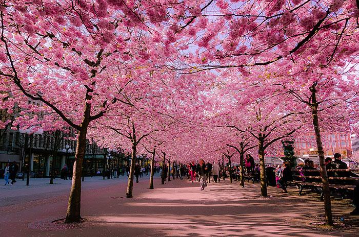 beautiful-streets-trellis-canopies-14__700