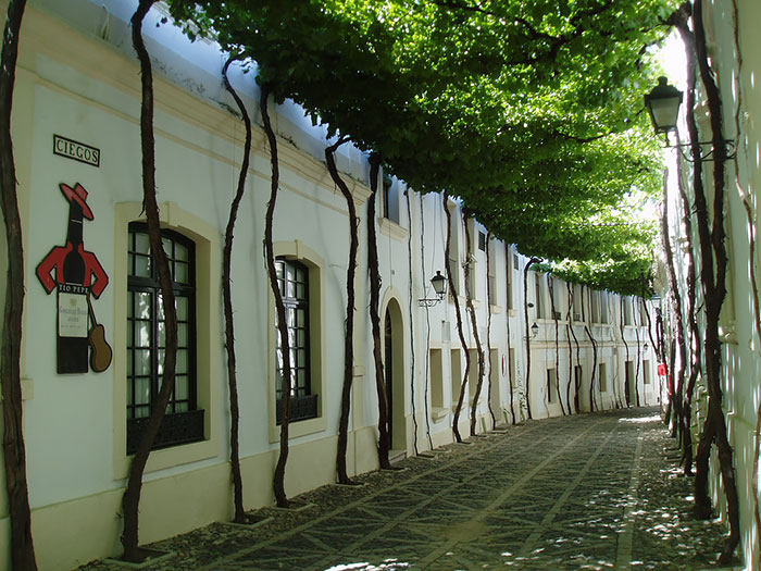 beautiful-streets-trellis-canopies-1__700