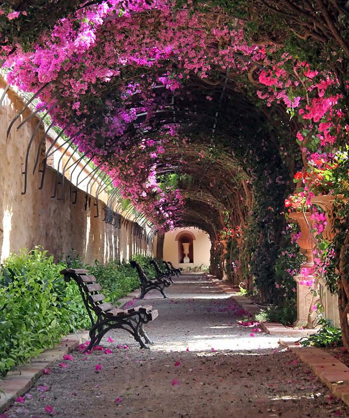 beautiful-streets-trellis-canopies-8__700