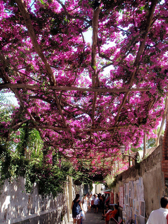 beautiful-streets-trellis-canopies-9__700