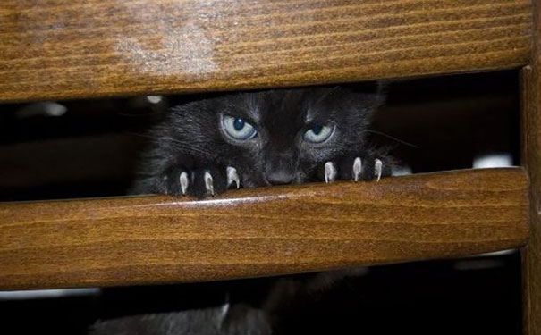 cat-plotting-to-kill-you-1__605