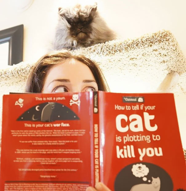 funny-evil-cat-planning-to-kill-you-91__605