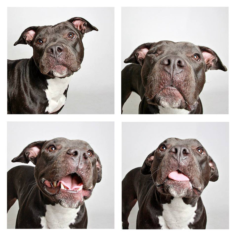 guinnevere-shuster-dogs-in-a-photo-booth-humane-society-_006
