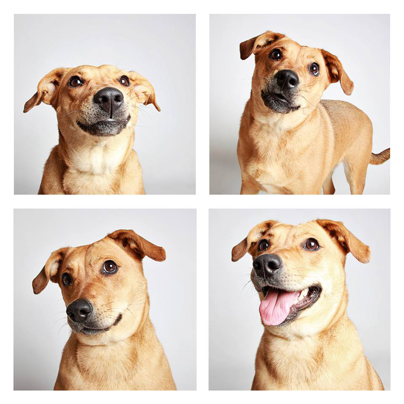 guinnevere-shuster-dogs-in-a-photo-booth-humane-society-_010