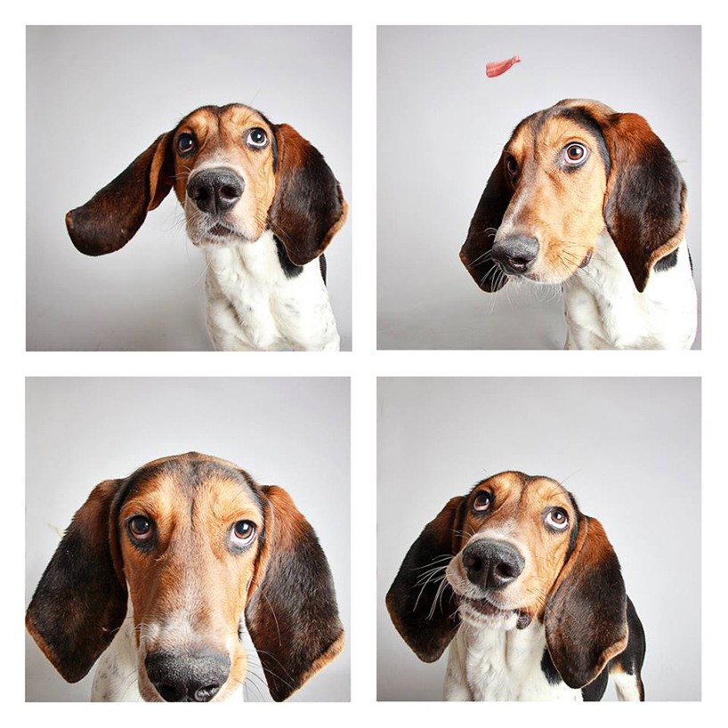 guinnevere-shuster-dogs-in-a-photo-booth-humane-society-_011