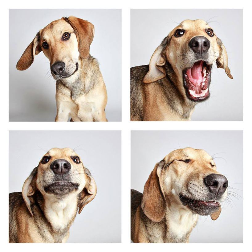 guinnevere-shuster-dogs-in-a-photo-booth-humane-society-_012