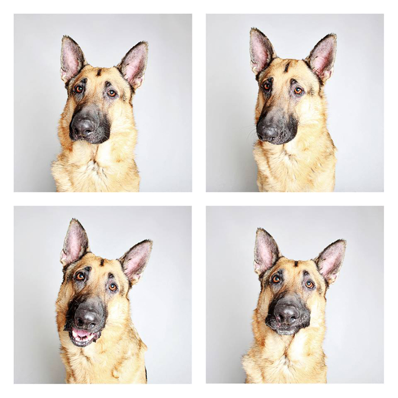 guinnevere-shuster-dogs-in-a-photo-booth-humane-society-_016