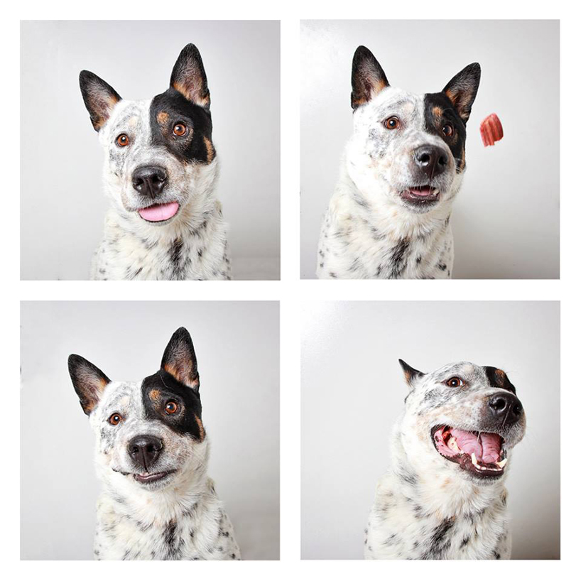 guinnevere-shuster-dogs-in-a-photo-booth-humane-society-of-u