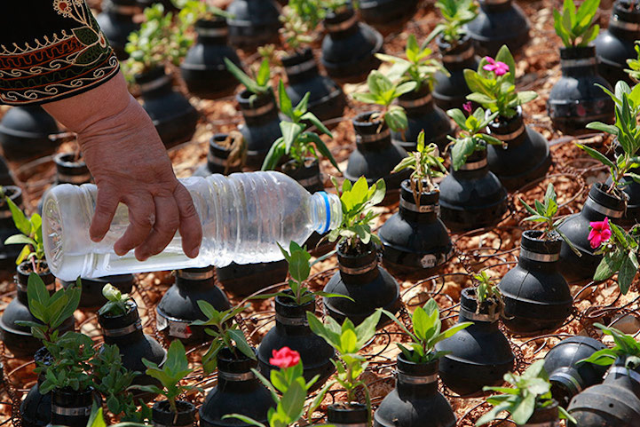 Flowers in tear gas canisters