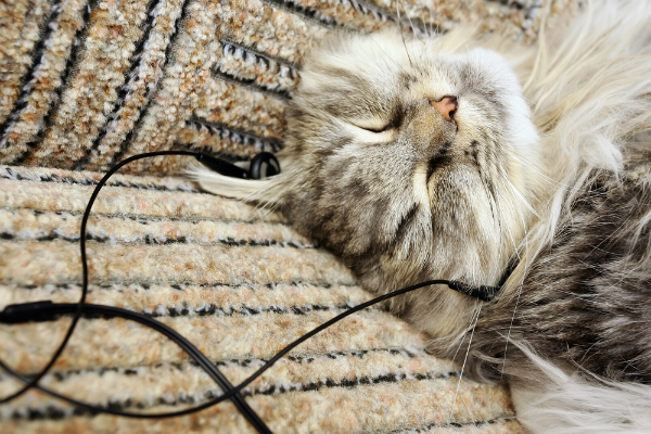 600px-cat-listening-to-music