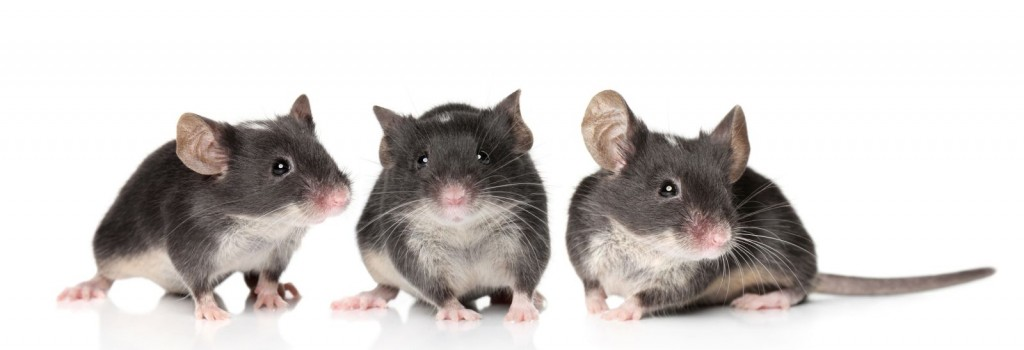 Three-Charming-Mice