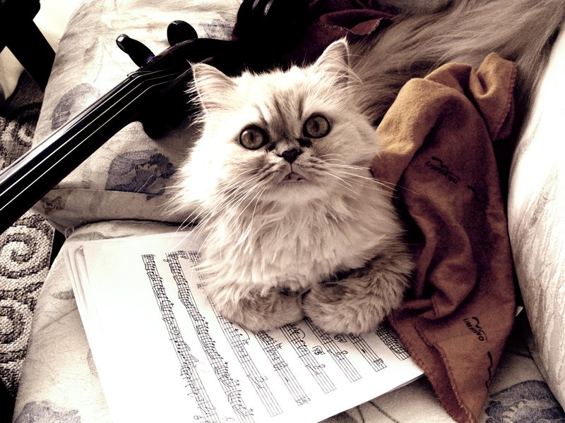 music_cat_by_keeru