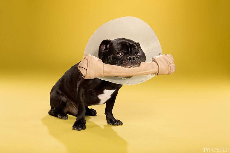 Timeout-Cone-of-shame-portrait-series1__880