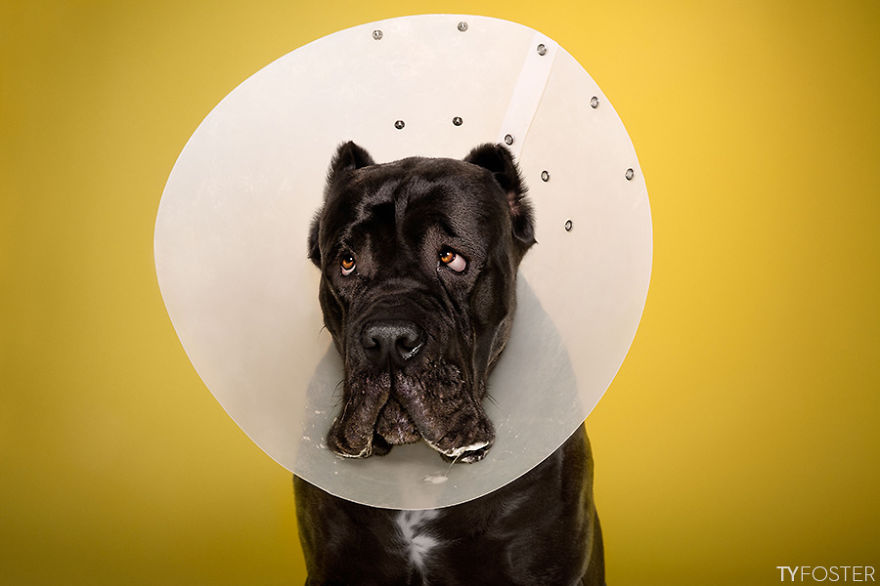 Timeout-Cone-of-shame-portrait-series4__880