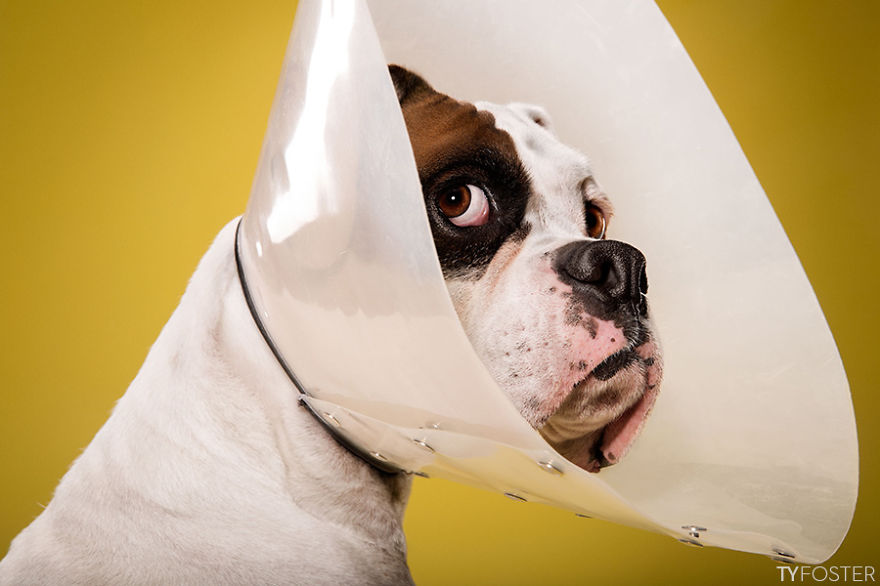 Timeout-Cone-of-shame-portrait-series8__880