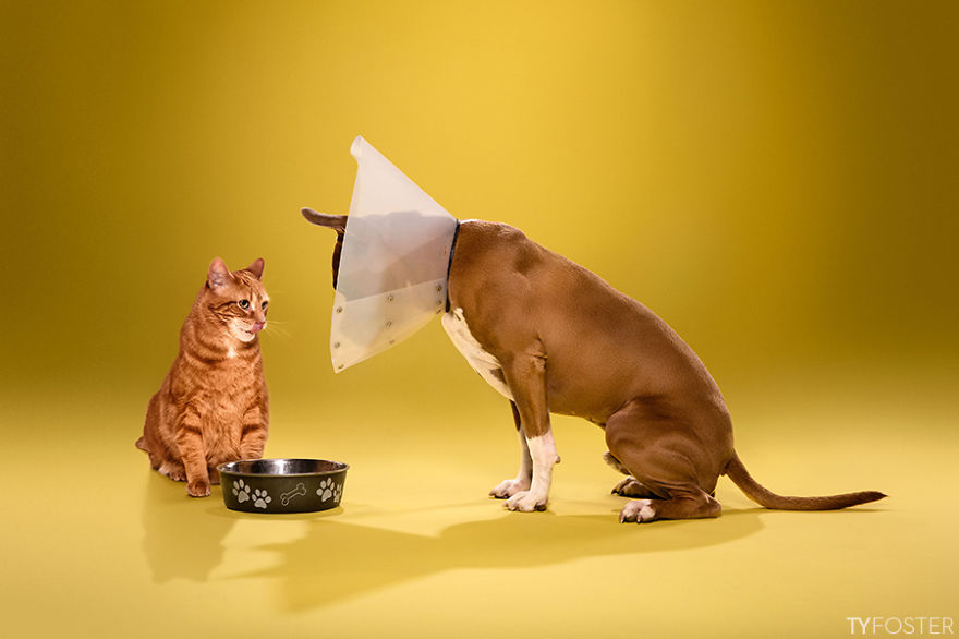 Timeout-Cone-of-shame-portrait-series__880