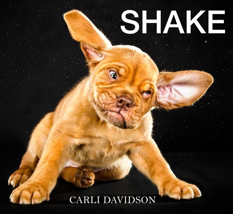 shake-11