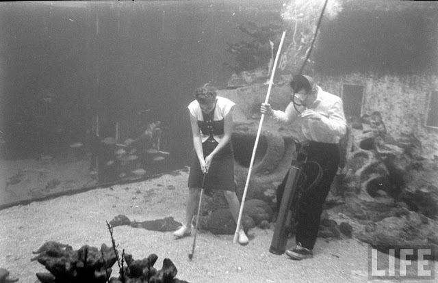 UnderwaterFashionShow2C194728929