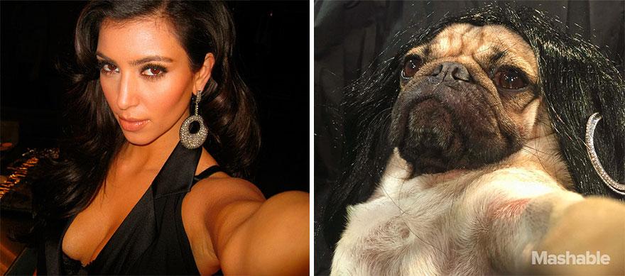 doug-the-pug-recreates-kim-kardashian-selfies-3