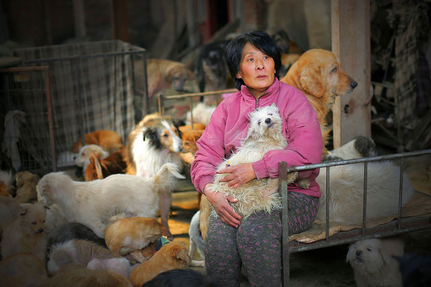 rescued-dogs-yulin-dog-meat-festival-china-1