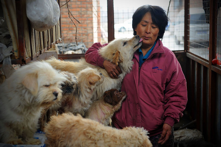 rescued-dogs-yulin-dog-meat-festival-china-12