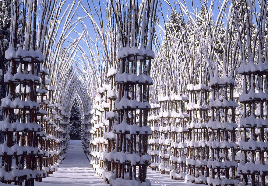 tree-cathedral-cattedrale-vegetale-giuliano-mauri-2