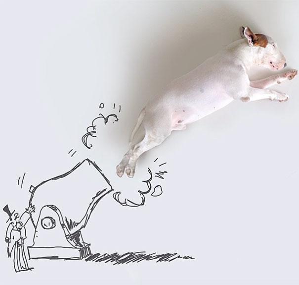 Jimmy-the-Bull-Terrier4__605