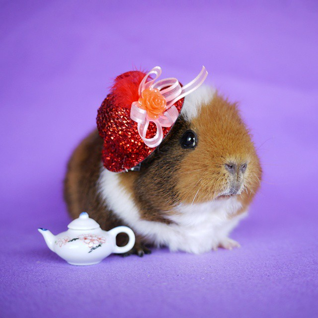 cute-hamster-costumes-fuzzberta-instagram-21