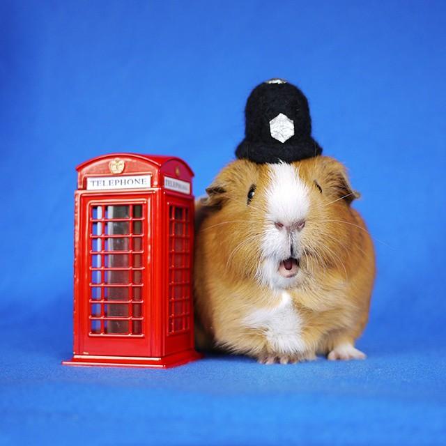 cute-hamster-costumes-fuzzberta-instagram-6
