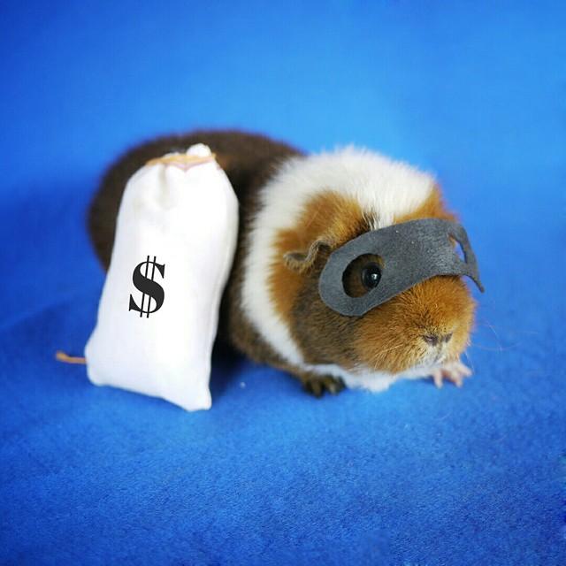 cute-hamster-costumes-fuzzberta-instagram-7