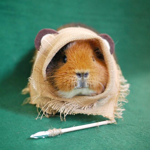 cute-hamster-costumes-fuzzberta-instagram-8
