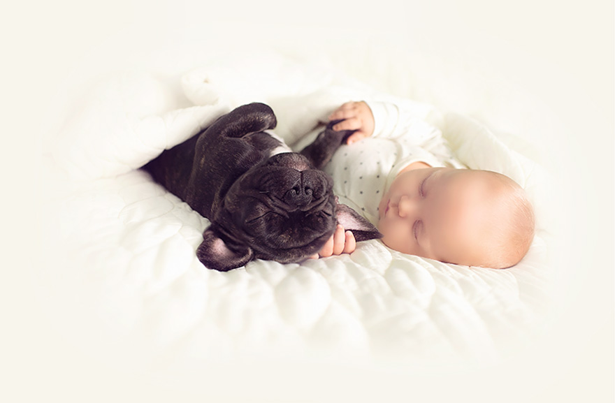 baby-dog-friendship-french-bulldog-ivette-ivens-10