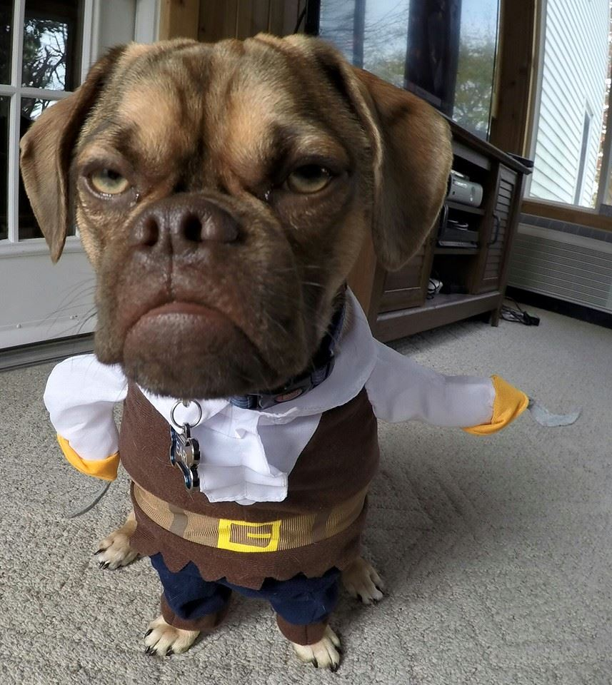 Earl The Grumpy Puppy Is The Most Judgy Animal On The
